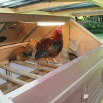 Chicken tractor roof open